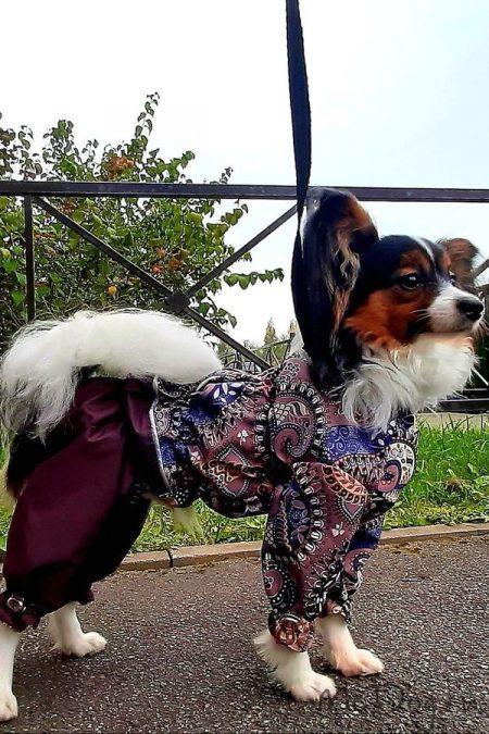 """Папильон Добби в дождевике на шелковой подкладке """"Какао огурцы""""☕"""