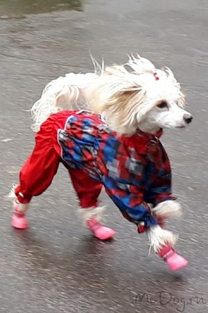 Купить Одежду для китайских хохлатых собак