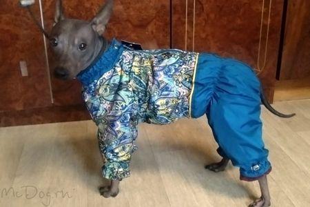 Одежда для Американского голого терьера в интернет магазине Mcdog.ru