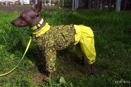 Купить Одежду для Американского голого терьера в интернет магазине Mcdog.ru