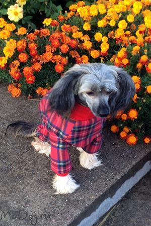 Купить одежду для собак в интернет магазине