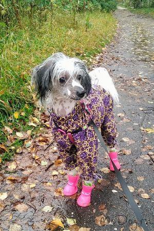 Купить одежду для Китайской Хохлатой собаки в интернет магазине Mcdog.ru