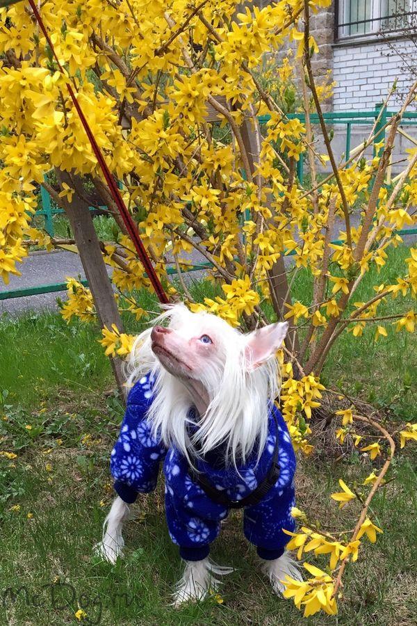 """Зимний флисовый комбинезон для собак McDog """"Синие цветы"""""""