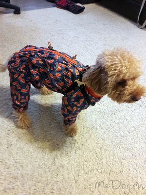 Одежда для пуделя в интернет магазине Mcdog.ru