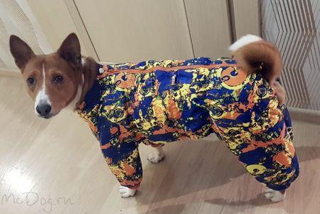 Одежда для басенджи в интернет магазине Mcdog.ru