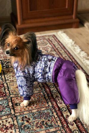 Одежда для папиньонов в интернет магазине Mcdog.ru