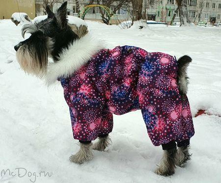 Одежда для Цвергшнауцеров в интернет-магазине Mcdog.ru