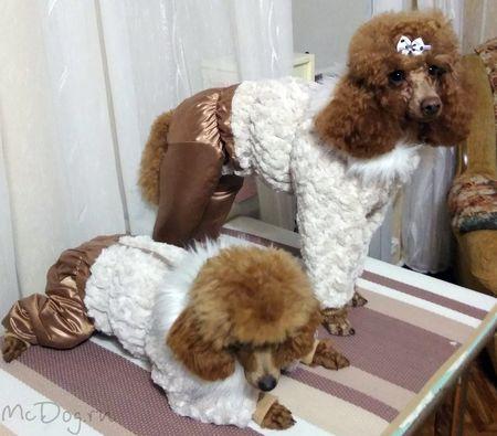 Одежда для пуделей в интернет магазине Mcdog.ru
