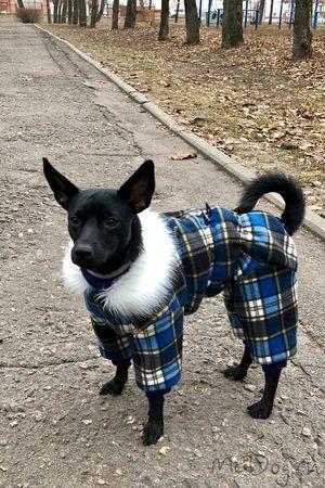 Одежда для собак в интернет магазине Mcdog.ru