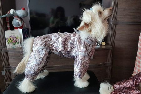 Пыльник для собак на McDog.ru