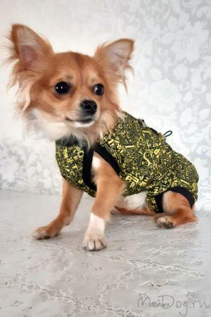 Одежда для собак чихуа в интернет магазине Mcdog.ru