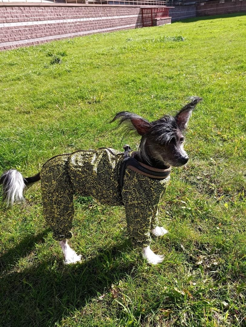 Отзывы про одежду для собак Mcdog.ru