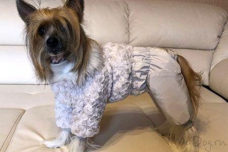 Одежда для КХС в интернет магазине Mcdog.ru