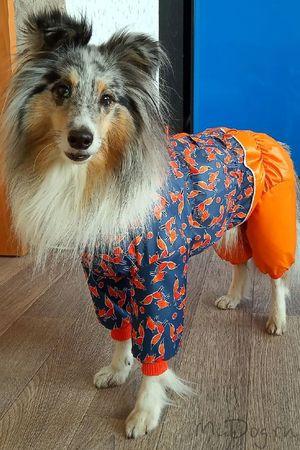 Одежда для собак в СПб