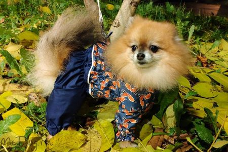 Качественная одежда для собак