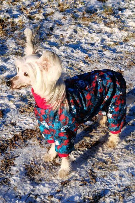 Одежда для китайской хохлатой собаки